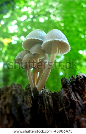 beautiful autumn mushrooms in the forest