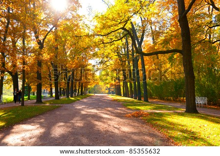 beautiful autumn park at sunny weather