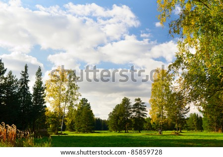 beautiful autumn park view at sunny weather