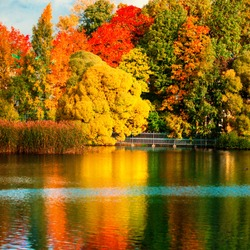 Beautiful autumn park with colourful leaves, trees and lake. Autumn Landscape.Park in Autumn. Forest in October