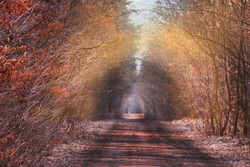 Beautiful autumn romantic tree tunnel. Natural tree tunnel in Ukraine. Love tunnel in autumn. Autumn forest tunnel of love.