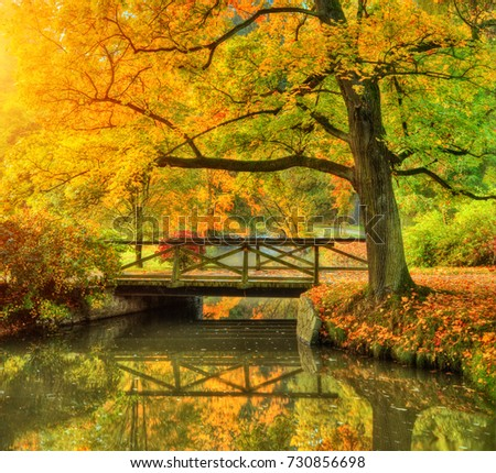 Beautiful autumn scenery in park. Outdoor photography in sunrise light