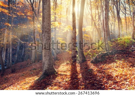 Beautiful autumn sunset in the forest with red leaves and trees (Crimea) - Shutterstock ID 267413696