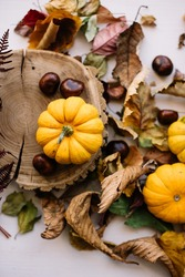 Beautiful autumn themed outlay: small orange pumpkins, autumn leaves, chestnuts, wooden slab on the white background, top view, flat lay