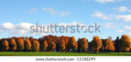 beautiful autumn treeline with blue sky and puffy clouds