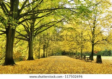 Beautiful autumn yellow lane in the forest good for wallpaper