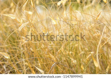 Beautiful Autumnal Background Wallpaper Meadow Field with Dry Tender Plants Flowers Grass Warm Earthy Tones Golden Glow. Cozy Fall Atmosphere Tranquility. Poster Banner Inspirational. Copy Space