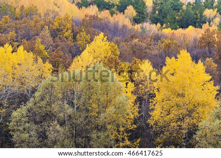 Beautiful autumnal forest landscape phorography forest in autumn colors - Shutterstock ID 466417625