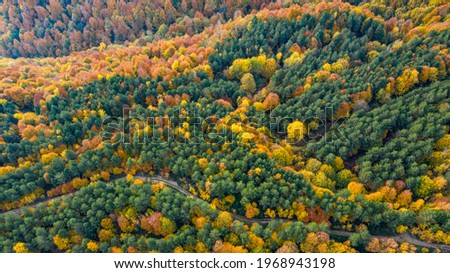 Beautiful autumnal landscape in the forest from hendek in Turkey Stok fotoğraf ©