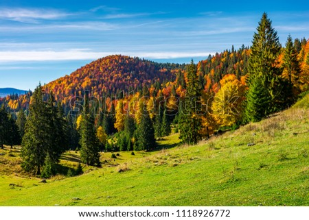 beautiful autumnal landscape of Apuseni mountains. colorful foliage on trees. tall spruce trees on the grassy hillside. mountain ridge far in the distance under the blue sky