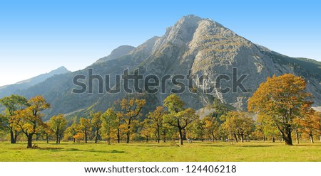 beautiful autumnal maple tree ground, karwendel, autumnal austria landscape