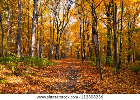 Beautiful autumnal park with colorful maple leaves covering the ground