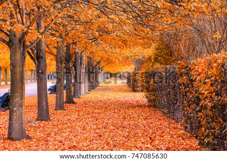 Stock Photo Beautiful autumnal scenery of tree tunnel in regent's park, London