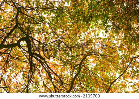 Beautiful autumnal tree canopy, in pretty bright colors.