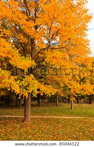 beautiful autumnal tree in park