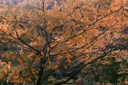 beautiful autumnleaves in thick forest