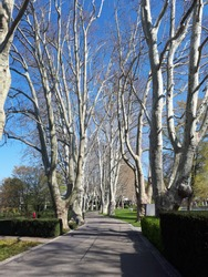 Beautiful avenue of trees at Zoo Karlsruhe in Germany