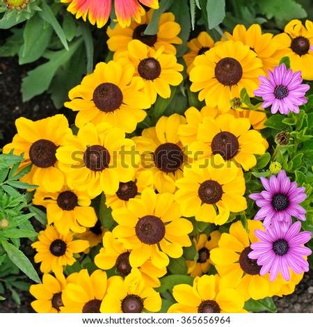 beautiful background of bright garden flowers #365656964