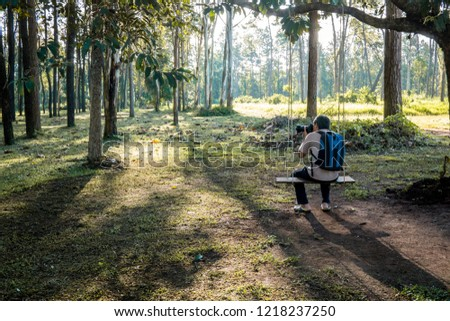 beautiful background, photographer sit on swings to take pictures in the morning. The sun is shining down. Good atmosphere at the pine forest at Thailand.