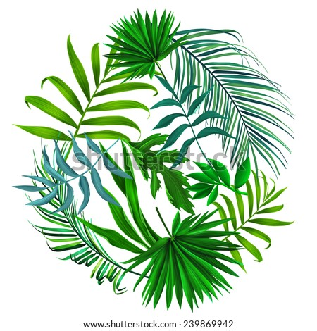 Beautiful background with tropical leaves. Round shape - Shutterstock ID 239869942