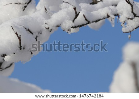 Beautiful background with winter atmosphere - snow on branches around picture, blue sky and copy space (free, empty place) for product or text (letters) in the middle. Christmas or New Year motive.