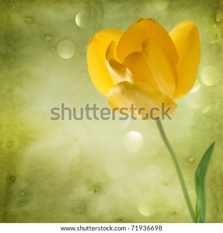 beautiful background with yellow tulip