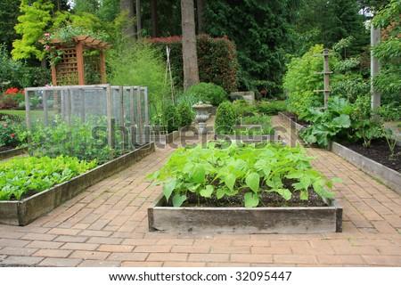 Beautiful backyard organic vegetable garden.