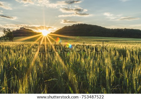 Beautiful barley field in sunset or sunrise. Grain under blue sky with clouds, sun star and hills in the background. Farming country, green field of barley. #753487522