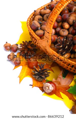 Beautiful basket full of autumn acorns, cones and chestnuts