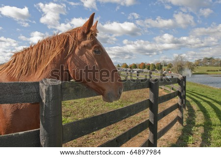 Beautiful bay horse behind a farm fence surrounded by a blue cloud filled sky.