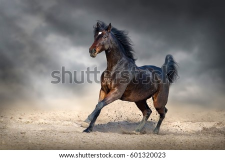 Beautiful bay horse run gallop in sandy field against dark sky