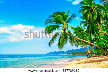 Beautiful beach. View of nice tropical beach with palms around. Holiday and vacation concept.  Tropical beach. #567789382