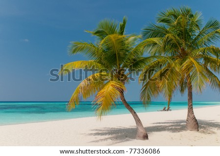 beautiful beach with coconut palm trees