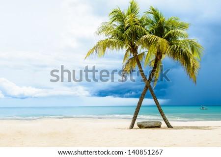 beautiful beach with palms ...
