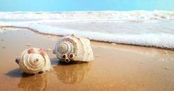 Beautiful beach with Seashells  Seashells Seashore Beautiful location