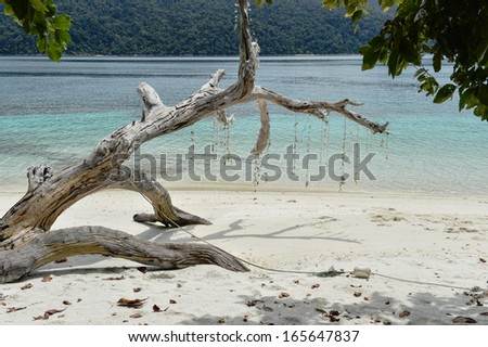 Beautiful beach with white dead trees