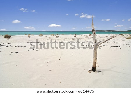 Beautiful beach with white sand and a dead tree near the azure sea