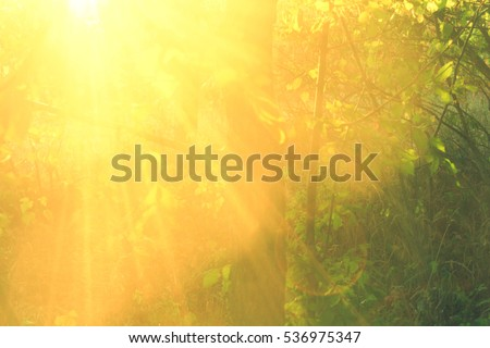 Beautiful beams of sun in the forest, close up #536975347