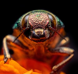 Beautiful Beetle with Colorful and Textured Body