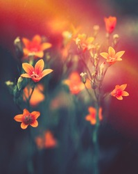 Beautiful bell flowers in nature in evening sunset close-up macro in orange and red dark tones. Gentle calm delightful artistic image of nature.