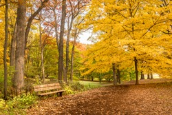 Beautiful bench along a path in a forest filled with colorful leaves.