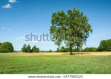Beautiful big oak in the meadow on sunny summer day #1477983125