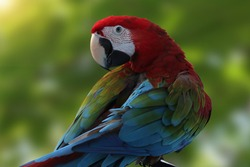 Beautiful bird,Macaw parrot is perching on a branch in the forest.close up