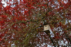 Beautiful birdhouse in the park.House for birds to live. It is made of wood and hangs at the branches. Bird house on a tree in the forest