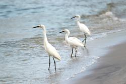 Beautiful birds in Naples Florida - Wadding bird