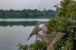 beautiful birds sitting on a pole near the chambal river in chambal garden ,kota