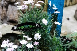 beautiful black and green butterfly standing on plants and flowers
