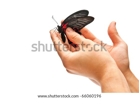 Beautiful black and red butterfly in hands - stock photo