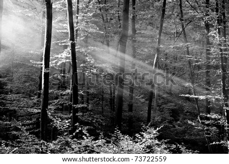 Beautiful black and white ray of light