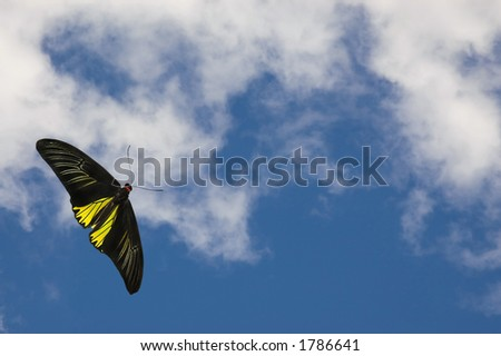Black And White Clouds Background. stock photo : Beautiful lack